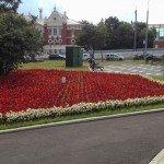 городской цветник