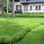 газон и живая изгородь Довиль