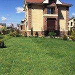 газон после покоса