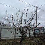 ухоженное дерево